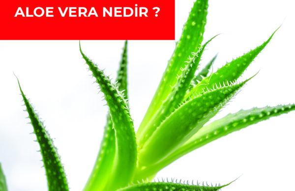 yazi-3